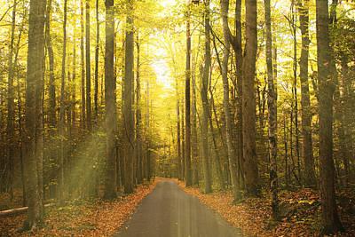 Sunny Roaring Fork Road Print by Jonas Wingfield