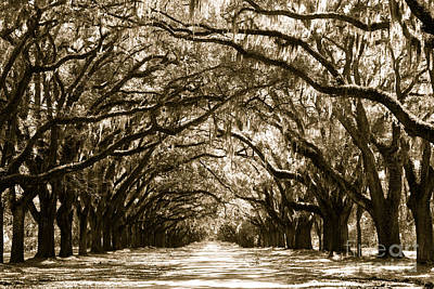 Sunny Southern Day - Sepia Print by Carol Groenen
