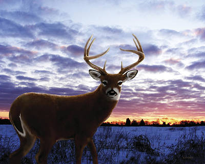 Sunrise Buck Print by Barbara Hymer