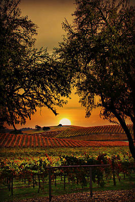 Fall Wine Grapes Photograph - Sunrise Fall Vineyard by Stephanie Laird
