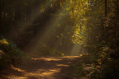 Birmingham Photograph - Sunrise In The Forest by Chris Fletcher