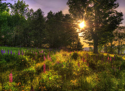 Sunrise Over Lupines - White Mountains Nh Print by Joann Vitali