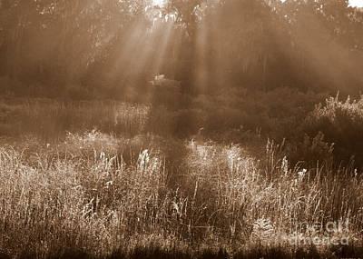 Sunrise Sepia Print by Carol Groenen