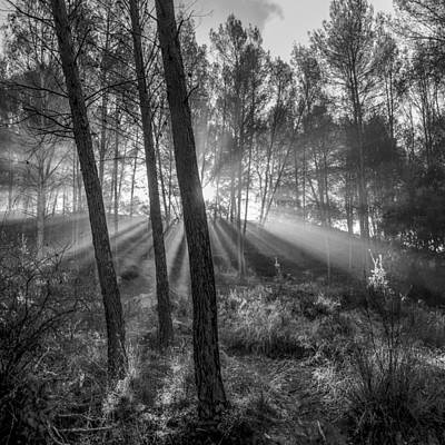 Sunrise Through The Foggy Forest Print by Guido Montanes Castillo