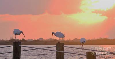Photograph - Sunrise With Ibis 10-26-16 by Julianne Felton