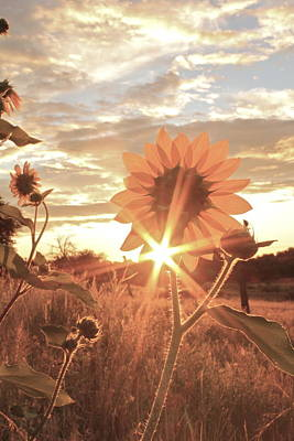 Photograph - Sunrise With Sunflowers by Crystal Magee
