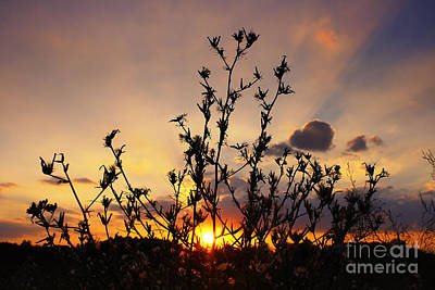 Sunset 2 Print by SK Pfphotography