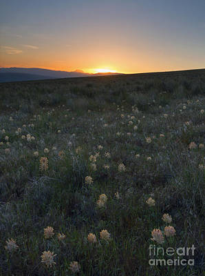 Sunset And Clover Print by Mike Dawson