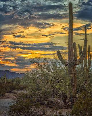 Sunset Approaches - Arizona Sonoran Desert Print by Jon Berghoff