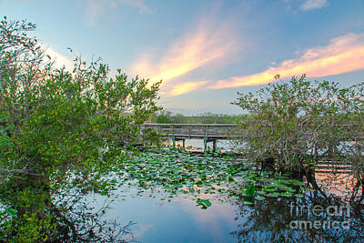 Landscape Photograph - Sunset At The Everglades National Park by Amanda Mohler
