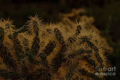 Sunset Kissed Cholla Print by Ruth Jolly