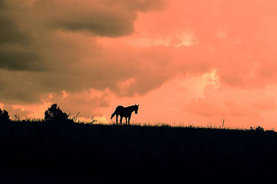 Horse Photograph - Sunset Mare by Emily Stauring