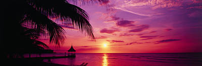 Sunset, Palm Trees, Beach, Water Print by Panoramic Images
