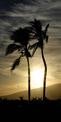 Sunset Palm Trees Maui Hawaii Print by Pierre Leclerc Photography