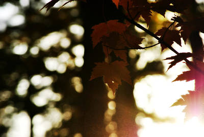 Cabin Wall Photograph - Sunset Through Autumn Foliage by Chastity Hoff