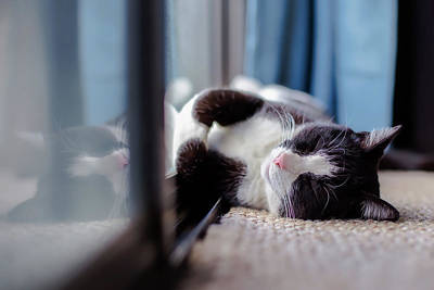 Catnap Photograph - Sunshine Lover by Tim Wright