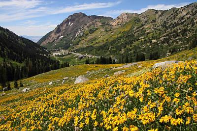 Nature Photograph - Superior Wasatch Wildflowers by Brett Pelletier