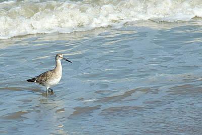 Dowitcher Photograph - Surf Walker by Bill Morgenstern