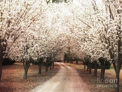 Surreal Dreamy Dogwood Trees South Carolina Print by Kathy Fornal