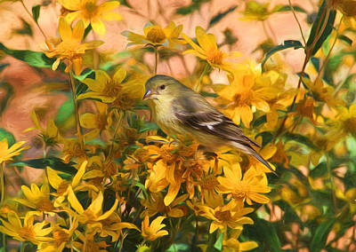 Finch Photograph - Surrounded By Gold 2 by Donna Kennedy