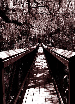 Palatka Bridge Photograph - Suspension Bridge by Bob Johnson