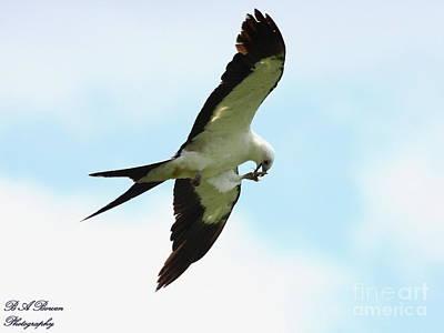 Swallow-tailed Kite Eating Original by Barbara Bowen