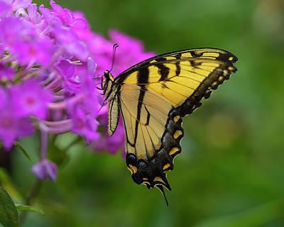 Swallowtail Photograph - Swallowtail  by Jeff Klingler