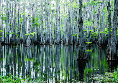 Cypress Stump Photograph - Swamp In Louisiana by Ester  Rogers