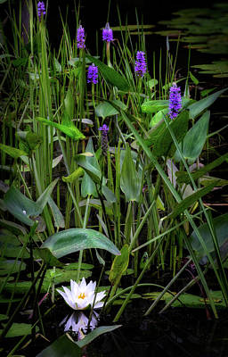 Pickerel Photograph - Swamp Things by Bill Wakeley