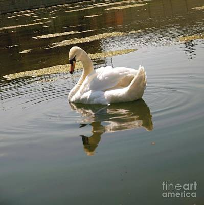 Chateau Mixed Media - Swan At The Chateau II by Louise Fahy
