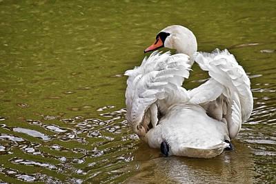 Artwork Photograph - Swan Elegance by Marcia Colelli