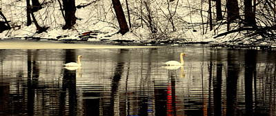 Eagls Digital Art - Swan Family by Aron Chervin