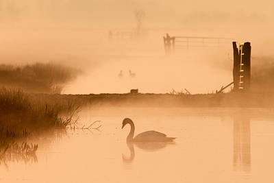 Swan In The Mist Print by Roeselien Raimond