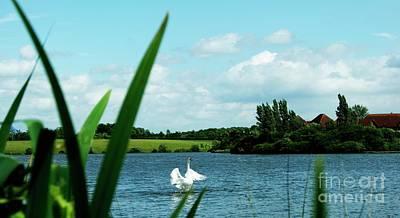 Swan Original by LDS Dya