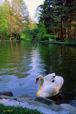 Summer Photograph - Swan Song by Bruce Thompson