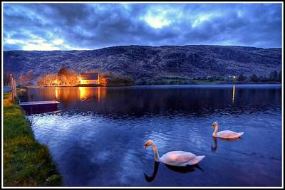 Gougane Barra Photograph - Swans At Gougane Barra by Joe Ormonde