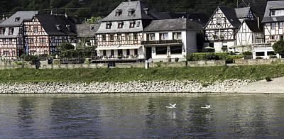 Swans On The Rhine In Spay Germany Print by Teresa Mucha