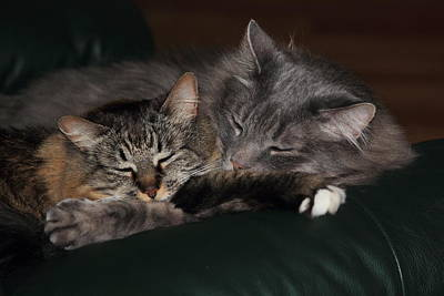 Pets Photograph - Sweet Dreams by Shane Bechler