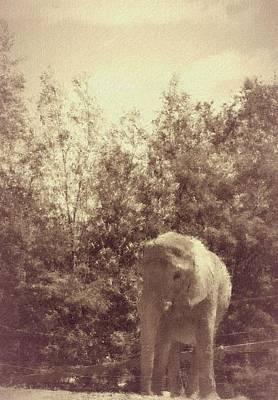 Love Photograph - Sweet Elefanta by  The Art Of Marilyn Ridoutt-Greene