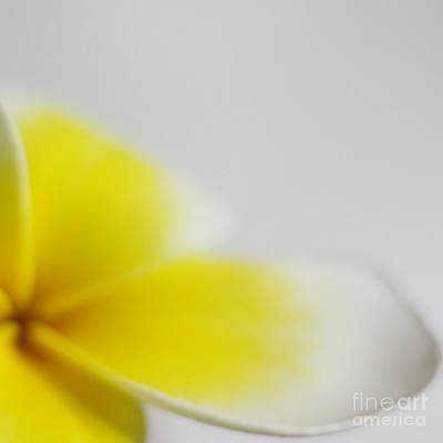 Plumeria Photograph - Sweet Fragrance Of Yellow by Mingtaphotography