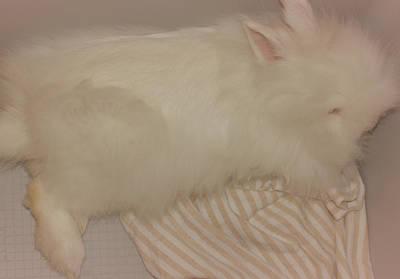 Bunny Photograph - Sweet Lazy Bunny by  The Art Of Marilyn Ridoutt-Greene