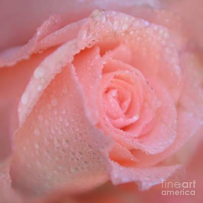 Rose Photograph - Sweet Memories In Pink by Olga Hamilton