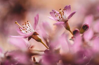 Sweet Taste Of Spring Print by Jenny Rainbow