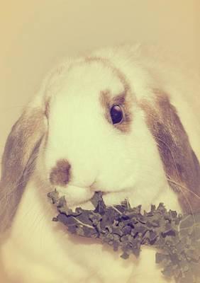 Bunnies Photograph - Sweetest Bun by The Art Of Marilyn Ridoutt-Greene