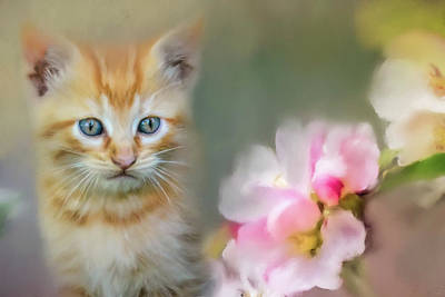 Kitten Photograph - Sweetness In A Small Package by Jai Johnson