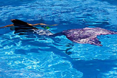 Mermaid Photograph - Swimming Mermaid by Garry Gay