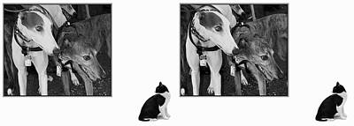 Sworn Enemies - Gently Cross Your Eyes And Focus On The Middle Image Print by Brian Wallace