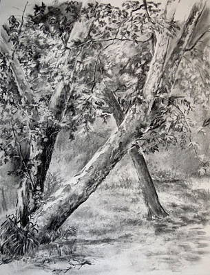 Park Scene Drawing - Sycamore Tree In Goliad State Park by Karen Boudreaux