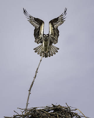 Bird Nest Photograph - Symmetry by Everet Regal