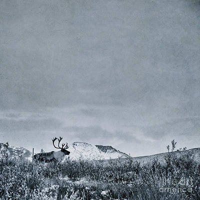 Caribou Photograph - Land Shapes 38 by Priska Wettstein
